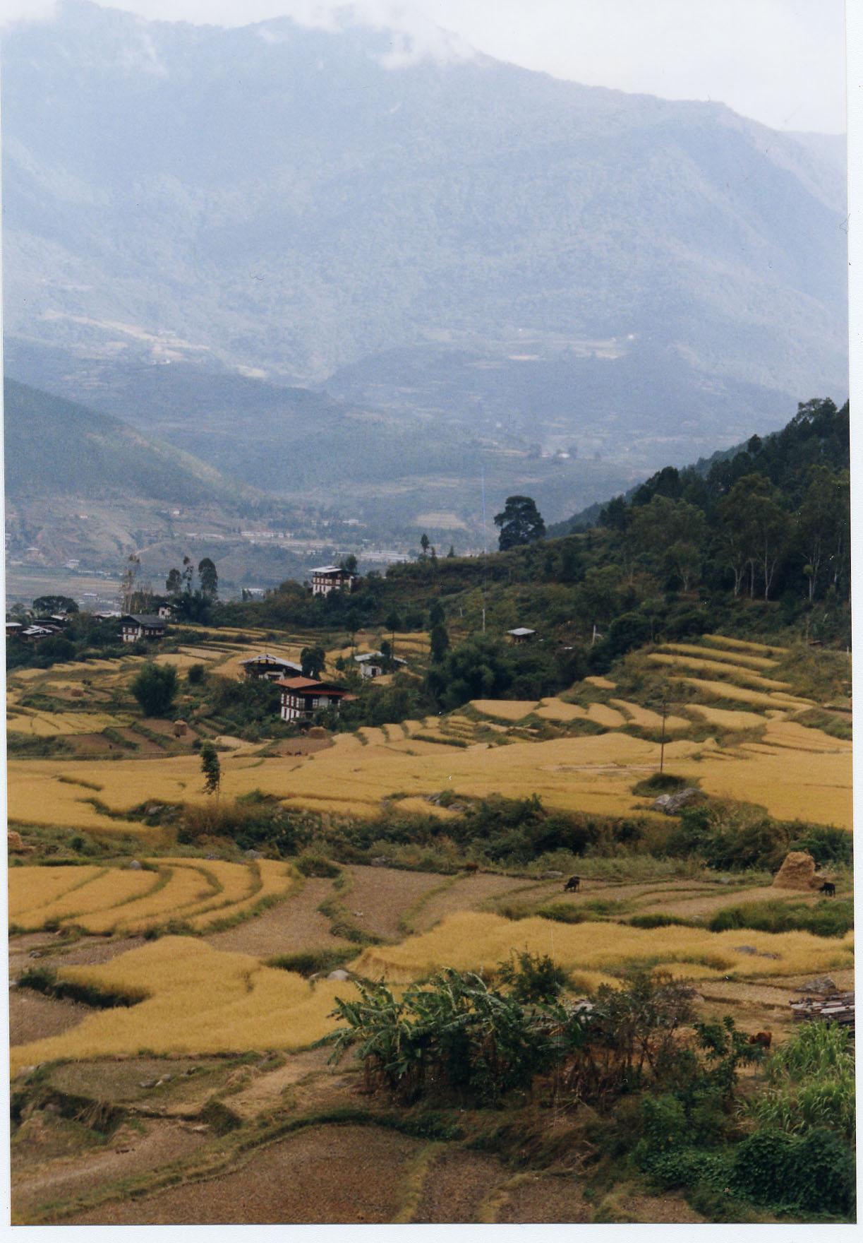 Bhutan kingdom of bhutan pax gaea country report for Terrace farming in india